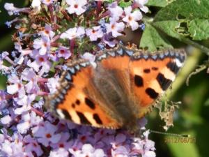 Vlinder in de zon Rol tong