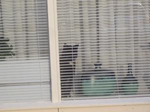 Tom Eenzaam opwacht dat de familie terug komt van vakantie